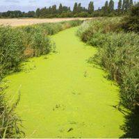 Rapporto nazionale pesticidi nelle acque
